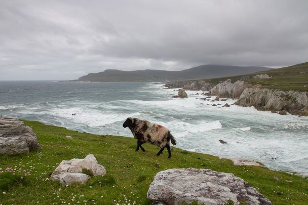 Achill Island, off the Mayo coast, in the west of Ireland.