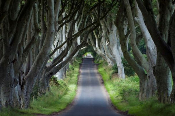 """The so-called \""""Dark Hedges\"""" in Co Antrim became a famous tourist stop for \""""Game of Thrones\"""" fans after being featured on the show."""