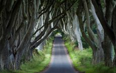 Thumb dark hedges northern ireland game of thrones   icp