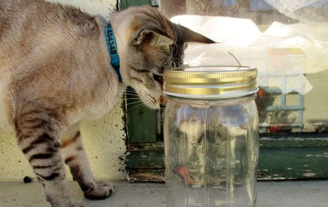 The poor cat stuck its head inside a glass jar to lick off food remains but caught its head and was trapped for five days before being rescued.