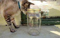 Thumb cat trapped glass jar getty
