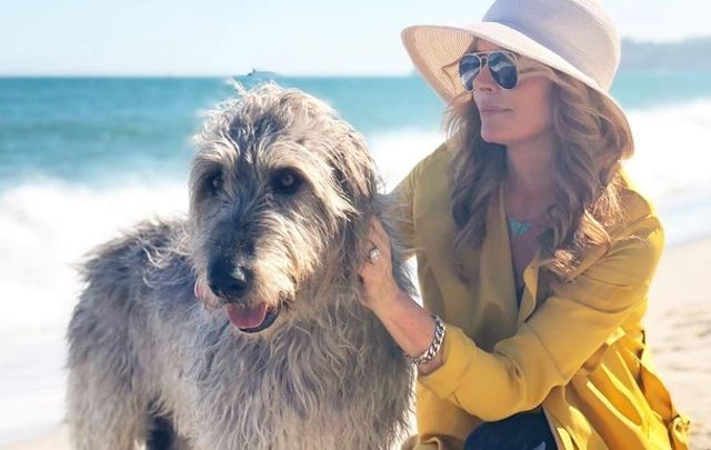 "Roma Downey says her Irish wolfhound brings her ""so much joy and comfort.\"""