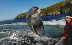 Co Kerry icon Fungie the Dolphin spotted after fears he was dead