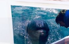 Swimming with a legend, Dingle's Fungie the Dolphin