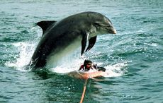 Bidding farewell to Dingle's iconic Fungie the Dolphin