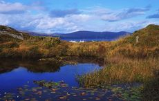 """Quarantining home in West Cork - breathing it in and explaining """"The Salute"""""""