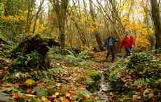 IrishCentral launches Irish Heritage Tree, planting roots in Ireland