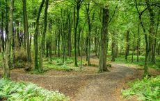 Thumb trees swinford co mayo   icp
