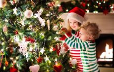 Last chance to plant your Irish family's roots in Ireland for Christmas