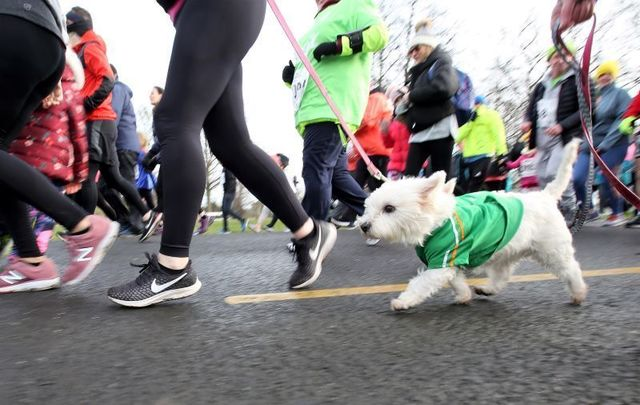 The Ireland Pub Crawl Virtual Challenge will benefit the Indiana Canine Assistant Network.