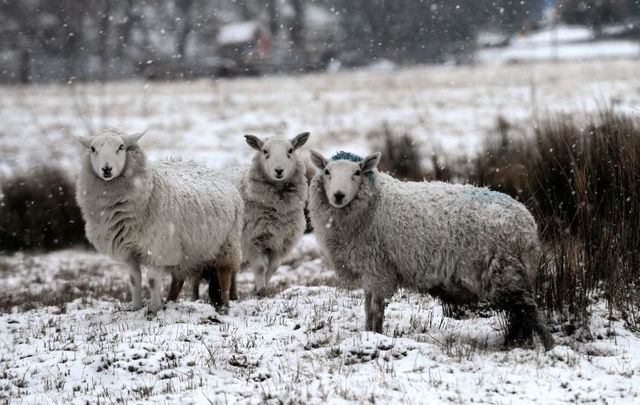 Met Éireann forecasts temperatures as low as -3 C for Ireland in the coming days.