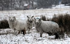 Cold weather in store for Ireland after Storm Jorge