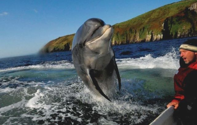Fungie, the famous dolphin from Dingle.