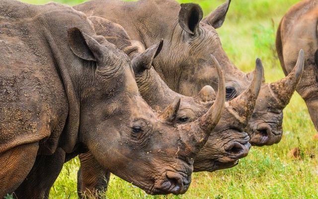John Slattery allegedly sold rhino horns in New York for $50,000.