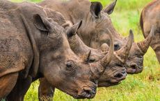 Irish man extradited to US for trafficking rhino horns appears in court