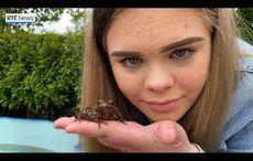 WATCH: Irish teen raising 37,000 tadpoles in her backyard goes viral on TikTok