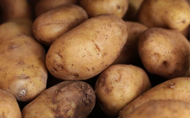 Genetically modified potatoes with improved resistance to blight.