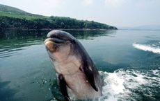 Fungie the Dolphin to be given a day of celebration in Dingle