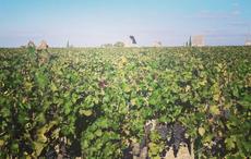 Sláinte! The Irish people leading the way in winemaking internationally