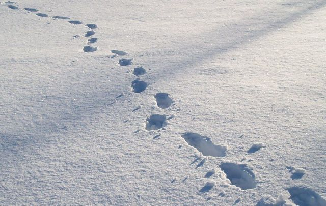 """Footprints in the snow: \""""Call me fanciful but I felt that these boot prints were telling me something about the loneliness of my new life.\"""""""