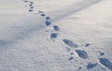 Boot prints in the snow - the solitary life of a lone immigrant