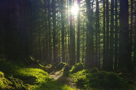 Ireland\'s forest parks experienced a surge in visitors during the pandemic.