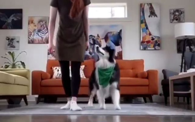 Secret and her owner Mary practiced their Irish dancing steps for St. Patrick\'s Day.