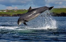 National Dolphin Day: Remembering Fungie the Dolphin, my hometown treasure