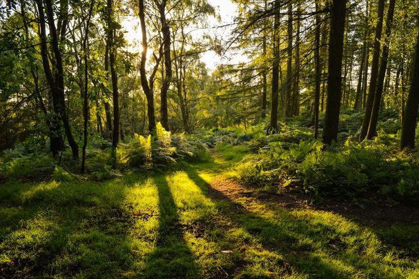 IrishCentral is planting 12,000 native Irish trees at a stunning location in Tipperary