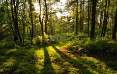 Play your part on Earth Day by planting an Irish Heritage Tree