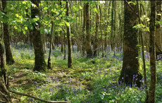 Celebrate Arbor Day by planting an Irish Heritage Tree