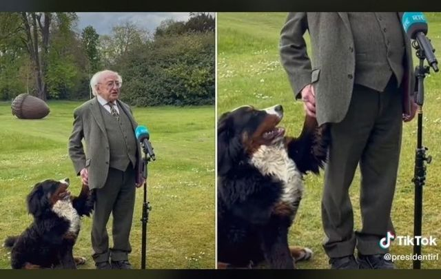 President Higgins had a special visitor during an  RTÉ interview on Sunday.
