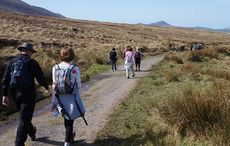 Seven Irish walks named among the best in Europe