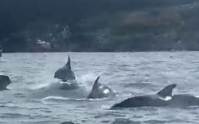 Pod of fifty dolphins was spotted off West Cork coast