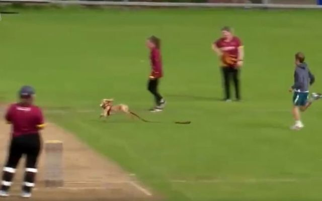 Dazzle the dog interrupted the Women\'s All-Ireland Cricket semi-final over the weekend