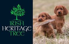 Plant an Irish Heritage Tree for your beloved pet on the Feast Day of St. Francis