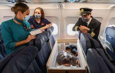 Precious cargo - Aer Lingus flies loggerhead turtle home to Gran Canaria