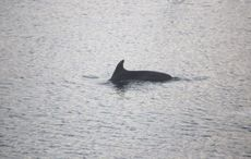 Tragedy as friendly dolphin found dead in Cork Harbour