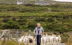 The original GOAT! Ireland's famous islands launch Aran Food Tour