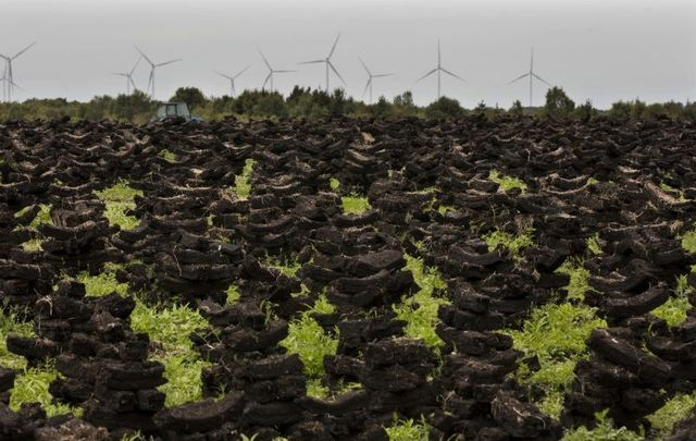July 7, 2019: Saved turf (peat) drying out on the Bog of Allen in County Kildare, while in the background, the wind turbines at Mount Lucas are visible.