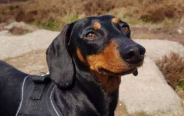 A GoFundMe has been launched to help get justice for Keisha the Dublin dachshund pup.