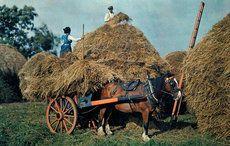 Thumb_mi-nat-geo-farmers-stack-hay-on-their-farm-in-county-cork