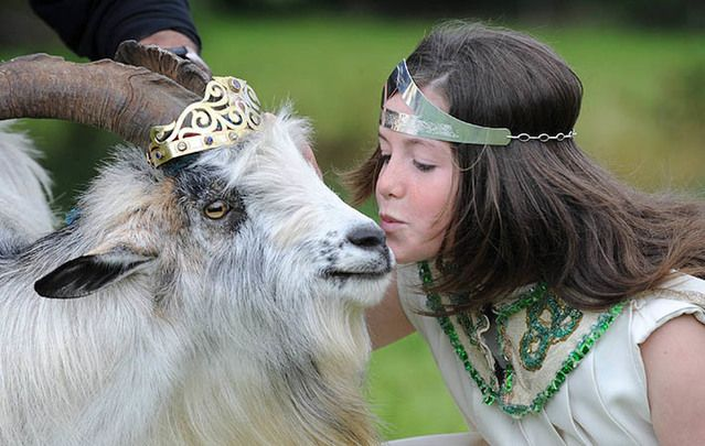 The queen kisses the king....Muireann Arthurs, Queen of Puck Fair, in 2011, coronates a wild mountain goat as King Puck at Puck Fair, Killorglin, County Kerry.