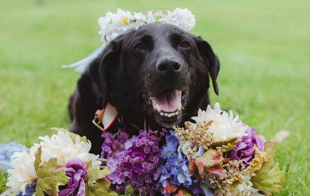 Charlie, who was diagnosed with a brain tumor, lived long enough to see his owner Kelly O'Connell happily married.