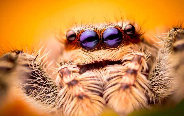 Researchers at NUI Galway have found that the venom of some spiders found in Ireland could have medicinal uses.