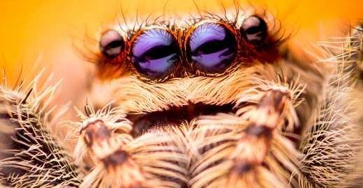 Cropped_spider-istock
