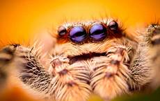 Thumb_spider-istock