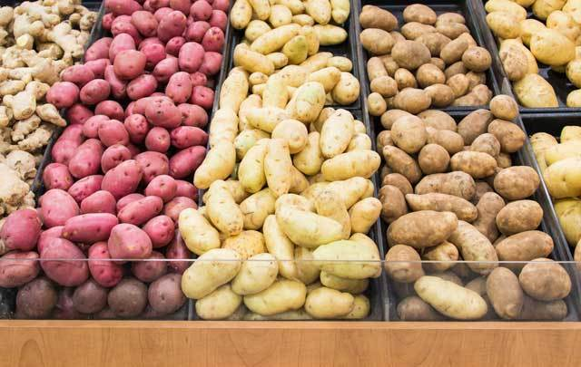 Two new types of genetically modified potatoes, which are resistant to late blight, have been approved for commercial planting by the U.S. Dept. of Agriculture.