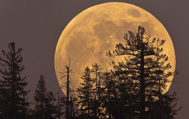 Crowds worldwide treated to the largest moon in almost 70 years.