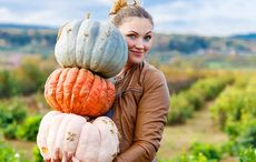 Thumb_cut_woman_field_pumpkins_thanksgiving